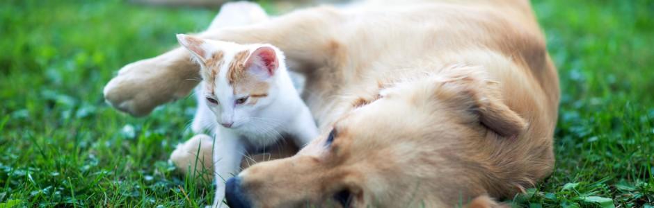 Hund und Katze beim spielen auf einer grünen Wiese